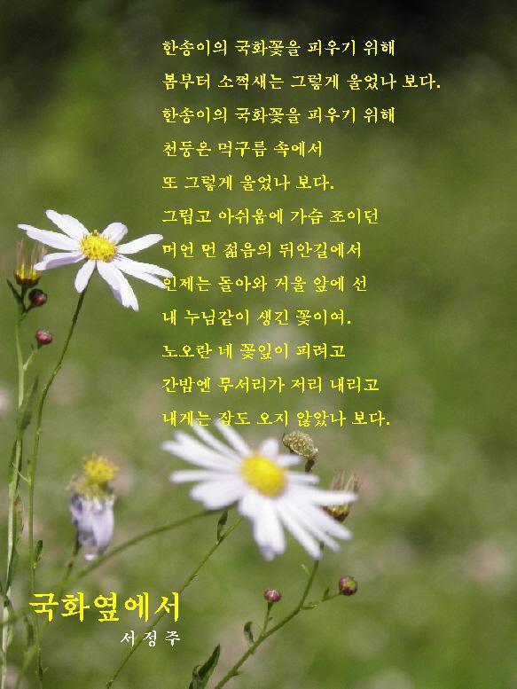 서정주-시-국화옆에서.jpg