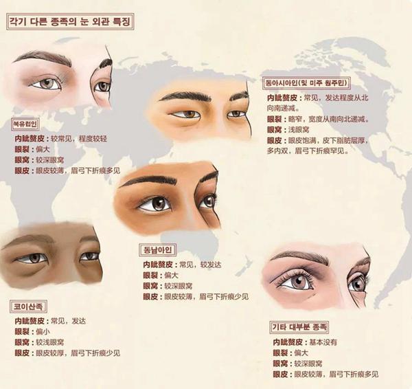 각-종족의-눈-외관-특징--사진-출처-博物-2020년-3월호.jpg