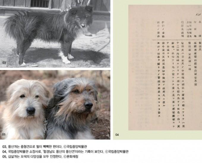 한국-문화재사랑-2021년-6월호-풍산개와-삽살개.jpg