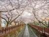 창원시, '폐쇄 17일' 진해 벚꽃관광지 코로나19 완벽 차단