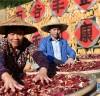 [청로 이용웅 칼럼]중국 <人民日報>의 농업뉴스와 <중국, 어떻게 구성됐나>