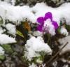 [청로 이용웅 칼럼] 1964년의 [눈이 내리네] 2020년 歲暮에도 눈이 내리네.