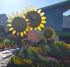 2019고양가을꽃축제, 9월 28일부터 일산 호수공원서