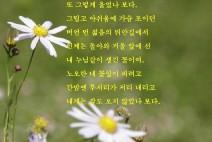 [청로 이용웅 칼럼] 천고마비와 황국단풍의 시월 & 시인의 국화 노래