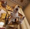 [개봉예정영화] 『프린스 코기』, 영국 로열패밀리 애완견 '코기'의 좌충우돌 모험기