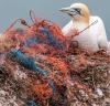 그린뉴딜 정부, 굴 껍질·플라스틱 불법 해양투기 의혹 불거져